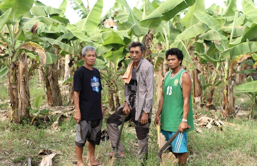 Drie boeren op fruitplantage