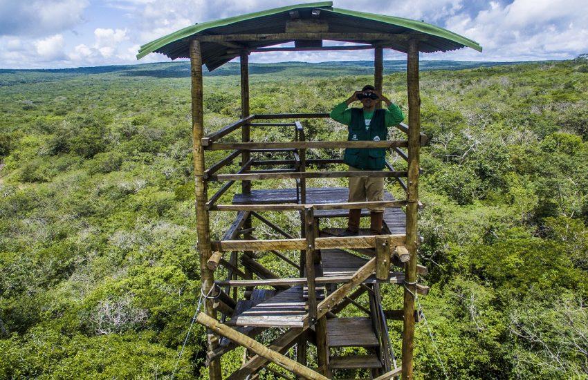 Man met verrekijker in uitkijktoren in het oerwoud