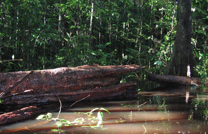 Stam van een omgevallen boom hangend boven water in het oerwoud