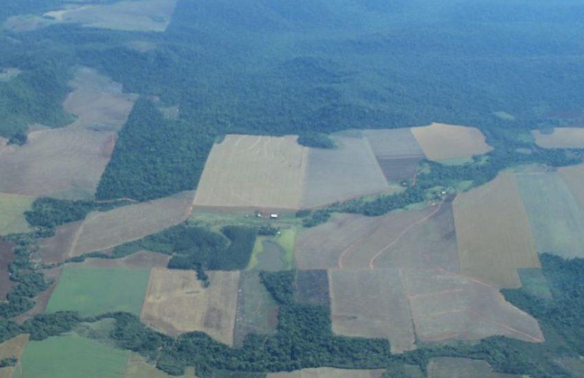 Deforestation in Paraguayan Chaco (c) Alberto Yanosky