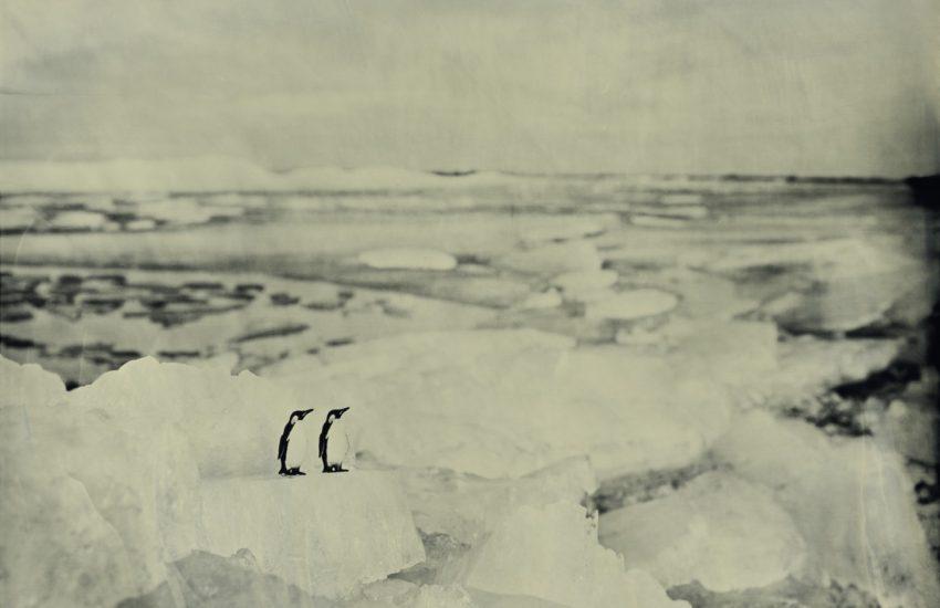 Twee pinguins op een ijsblok