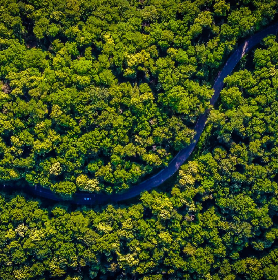 Aerial view forest - Photo by Vlad Hilitanu on Unsplash