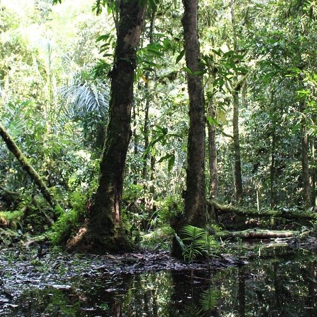 A swamp in the depths of Atewa Forest in Ghana