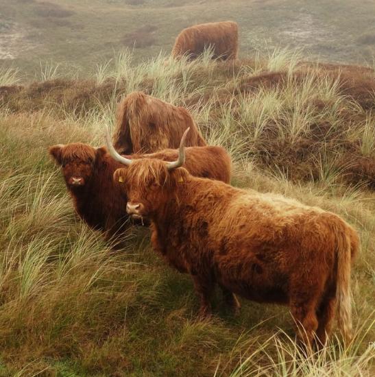 Cow on Texel - Photo by Marlon Paul Bruin on Unsplash