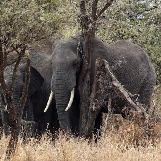 Elephants - Photo by Jeff Lemond on Unsplash