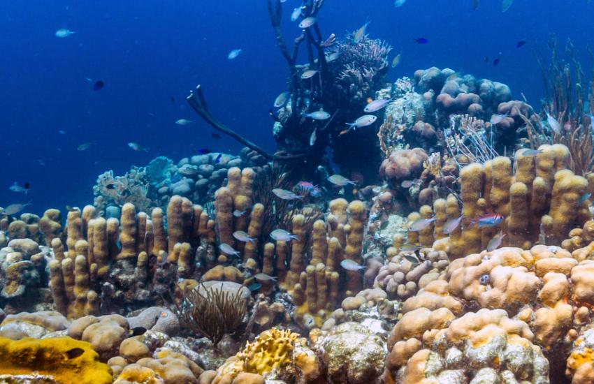 coral reef bonaire