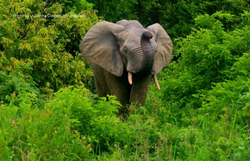 Elephant in Mole National Park, Ghana - Photo by Julianna Corbett on Unsplash
