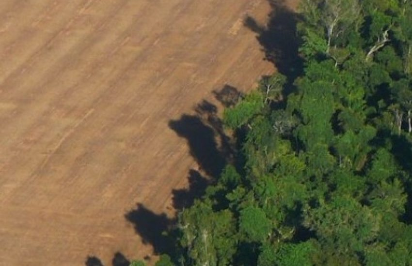 Deforestation for soy production