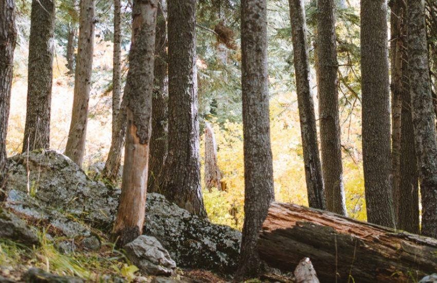 European Forest (c) Yaroslav Shuraev