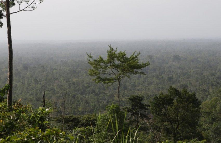 Atewa Forest (c) Jan Willem den Besten
