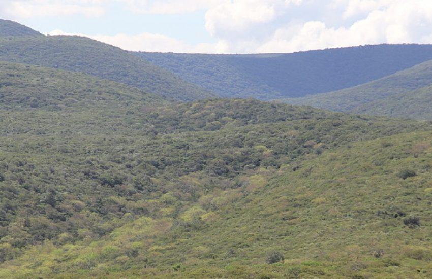 Paraguayan Chaco (c) WWF Paraguay