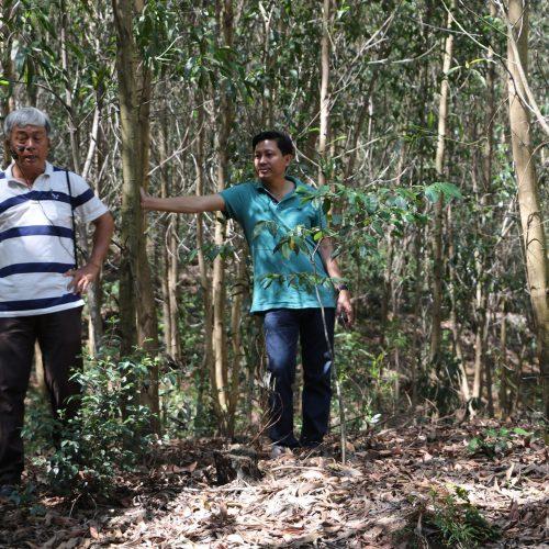 Vietnature timber